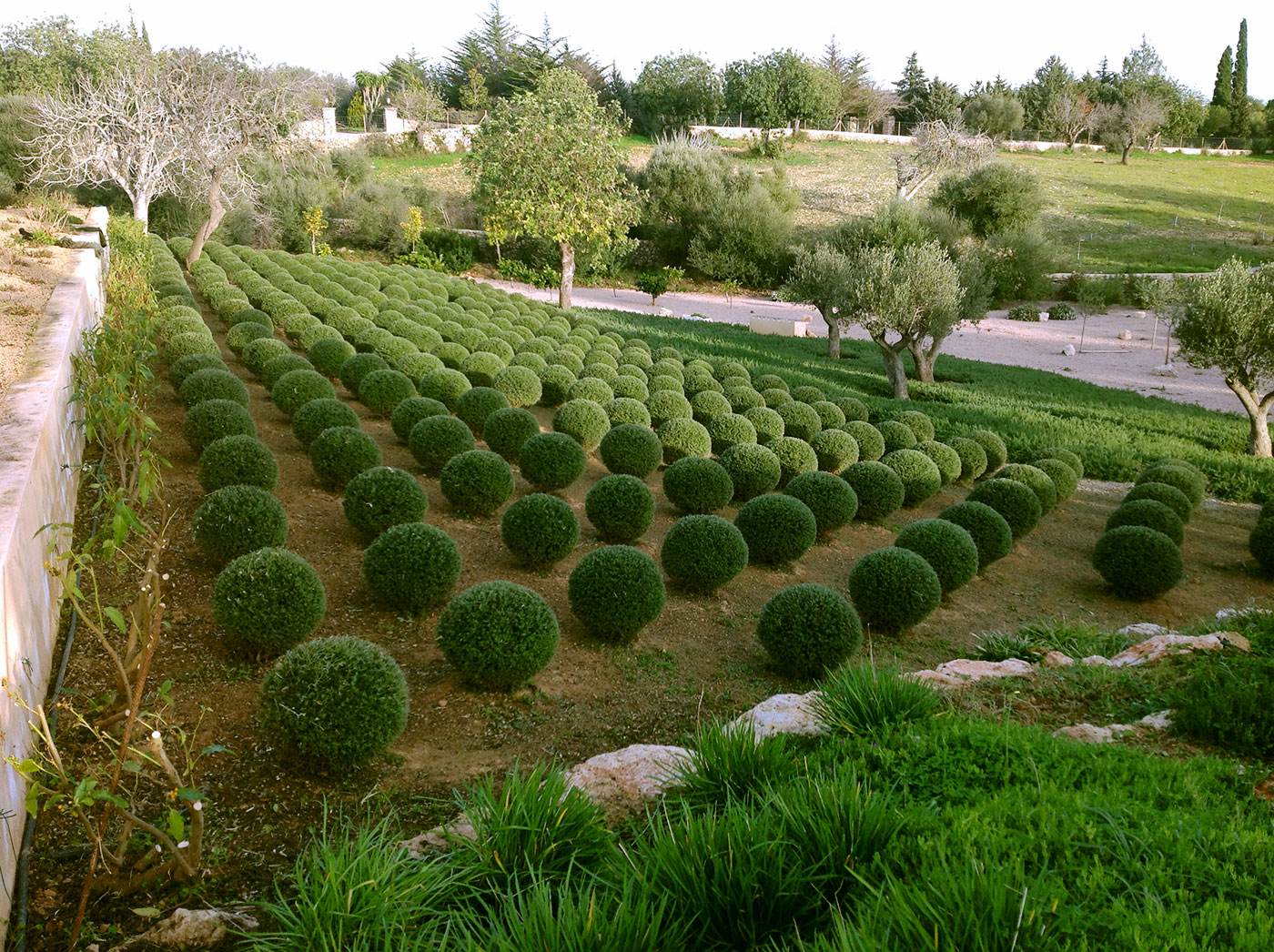 Garden.majorca.prof_.help_.landscape | Son Muda Gardens U2013 Helene Lindgens